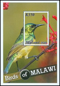 Cl: Collared Sunbird (Hedydipna collaris) SG 1136 (2016) 160
