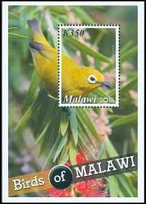 Cl: African Yellow White-eye (Zosterops senegalensis) SG 1137 (2016)