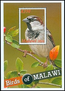Cl: House Sparrow (Passer domesticus)(Repeat for this country)  SG 1133 (2016)