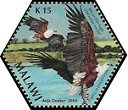 Cl: African Fish-Eagle (Haliaeetus vocifer)(Repeat for this country)  SG 1031h (2004)