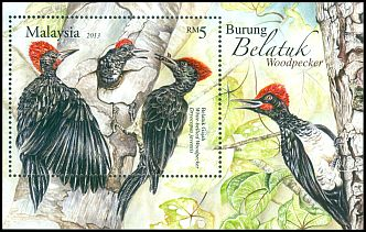 Cl: White-bellied Woodpecker (Dryocopus javensis)(Repeat for this country)  SG 1936 (2013) 750 [11/17]