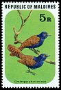 Cl: Pheasant Coucal (Centropus phasianinus)(Out of range and no other stamp)  SG 710 (1977) 650