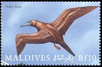 Cl: Red-footed Booby (Sula sula)(Repeat for this country)  SG 3292 (2000) 200