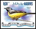 Cl: Grey Wagtail (Motacilla cinerea) new (2014)