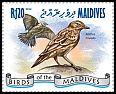 Cl: Tree Pipit (Anthus trivialis)(Repeat for this country)  new (2014)