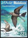 Cl: Wilson's Storm-Petrel (Oceanites oceanicus)(Repeat for this country)  new (2015)