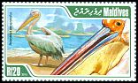 Cl: Great White Pelican (Pelecanus onocrotalus) new (2013)  [9/14]