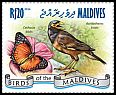 Cl: Common Myna (Acridotheres tristis) new (2014)
