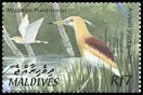 Cl: Indian Pond-Heron (Ardeola grayii phillipsi) SG 3687 (2002) 140 [1/7]