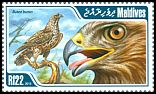 Cl: Eurasian Buzzard (Buteo buteo) new (2013)  [9/14]