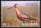 Cl: Bar-tailed Godwit (Limosa lapponica) SG 4083 (2007) 65