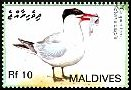 Cl: Caspian Tern (Sterna caspia)(Repeat for this country)  SG 4091 (2007) 250 [4/16]