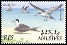 Cl: Sooty Tern (Sterna fuscata)(Repeat for this country)  SG 3669 (2002) 100