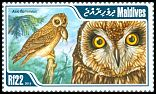 Cl: Short-eared Owl (Asio flammeus)(Repeat for this country)  new (2013)  [9/14]