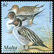 Cl: Northern Pintail (Anas acuta) SG 1224 (2001)