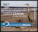 Cl: Great Blue Heron (Ardea herodias) <<Garza ceniza>>  new (2010)  [6/35]