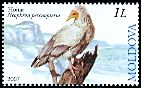 Cl: Egyptian Vulture (Neophron percnopterus) <<Hoitar>>  SG 583 (2007)  [4/20]