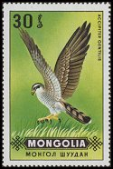 Cl: Northern Goshawk (Accipiter gentilis) SG 577 (1970) 15 [3/19]
