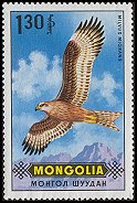 Cl: Black Kite (Milvus migrans) SG 581 (1970) 45 [3/19]