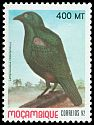 Cl: Lesser Blue-eared Glossy-Starling (Lamprotornis chloropterus) SG 1332 (1992)