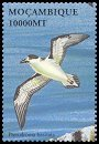 Cl: Black-capped Petrel (Pterodroma hasitata)(Out of range)  SG 1624f (2002)