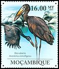 Cl: African Openbill (Anastomus lamelligerus) <<Bico-aberto>>  new (2011)  [7/36]