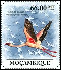 Cl: Lesser Flamingo (Phoenicopterus minor) <<Flamingo-pequeno>> (Repeat for this country)  new (2011)  [7/36]