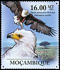 Cl: African Fish-Eagle (Haliaeetus vocifer) <<Aguia pesqueria Africana>> (Repeat for this country)  new (2011)  [7/37]