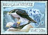 Cl: Northern Goshawk (Accipiter gentilis)(Out of range)  new (2007)  [4/42]
