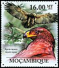 Cl: Tawny Eagle (Aquila rapax) <<Aguia-rapace>> (Repeat for this country)  new (2011)  [7/37]