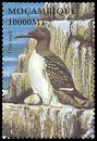 Cl: Common Murre (Uria aalge)(Out of range)  SG 1624i (2002)