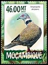 Cl: African Mourning Dove (Streptopelia decipiens) new (2015)