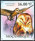 Cl: African Grass-Owl (Tyto capensis) <<Mocho do Capim>>  new (2011)  [7/37]