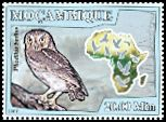 Cl: Little Owl (Athene noctua)(Out of range)  new (2008)  [4/46]