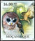 Cl: African Wood-Owl (Strix woodfordii) <<Mocho da floresta>> (Repeat for this country)  new (2011)  [7/37]