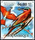 Cl: Southern Carmine Bee-eater (Merops nubicoides) <<Abelharuco-carmin>>  new (2011)  [7/38]
