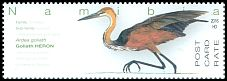 Cl: Goliath Heron (Ardea goliath) SG 1289 (2016)