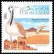 Cl: Rueppell's Bustard (Eupodotis rueppellii)(Endemic or near-endemic)  new (2012)  [7/49]