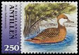 Cl: White-cheeked Pintail (Anas bahamensis) SG 1632 (2004)  [3/28]