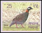 Cl: Black Francolin (Francolinus francolinus) new (2016)  [5/35]