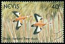Cl: Black-bellied Whistling-Duck (Dendrocygna autumnalis) SG 615 (1991)
