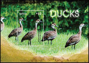 Cl: West Indian Whistling-Duck (Dendrocygna arborea)(I do not have this stamp)  new (2014)