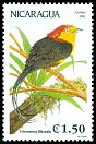 Cl: Wire-tailed Manakin (Pipra filicauda)(Out of range)  SG 3178 (1991)