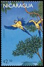 Cl: Blue-and-yellow Macaw (Ara ararauna)(Out of range) (not catalogued)  (1999)