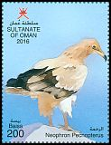Cl: Egyptian Vulture (Neophron percnopterus) new (2016)