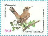 Cl: Rufous-tailed Scrub-Robin (Cercotrichas galactotes)(not catalogued)  (2017)