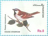 Cl: House Sparrow (Passer domesticus)(not catalogued)  (2017)