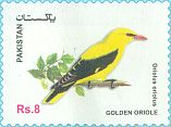 Cl: Eurasian Golden Oriole (Oriolus oriolus)(not catalogued)  (2017)