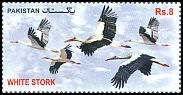 Cl: White Stork (Ciconia ciconia) new (2012)  [11/4]