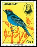 Cl: Blue Manakin (Chiroxiphia caudata) <<Bailarin>> (not catalogued)  (1985) 0